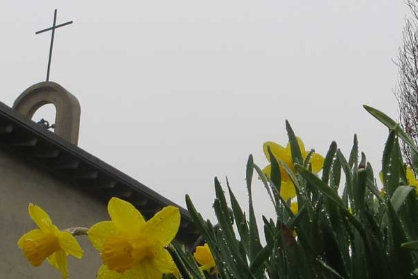 LH_daffodils_700