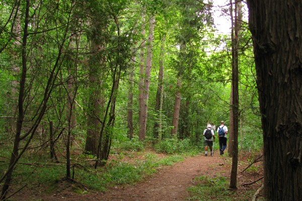 two people walking on forest path