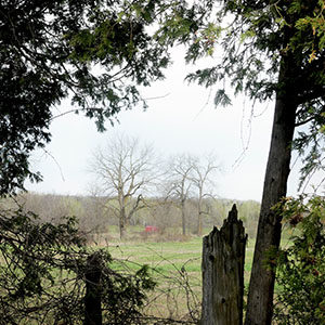 """Looking through a """"window"""" in the cedars to the field and trees beyond"""